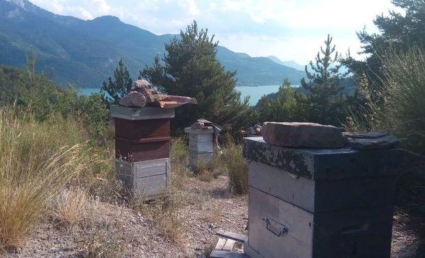Visuel du projet Adopte une ruche dans les Hautes Alpes