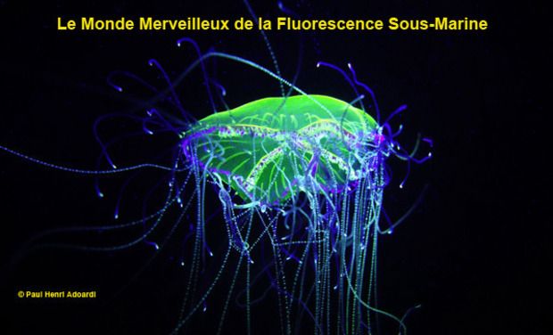 Visueel van project Le Monde Merveilleux de la Fluorescence Sous-Marine