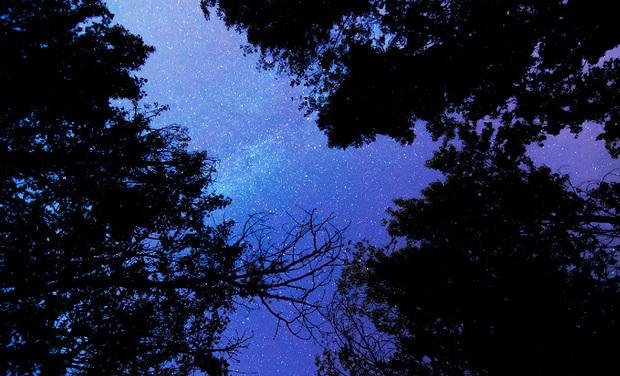 Visuel du projet La tête dans les étoiles