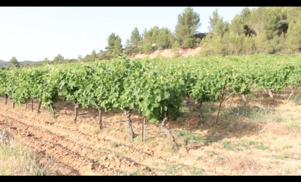"""Visuel du projet Financement des étiquette du vin """"Mathieu Cortés"""""""