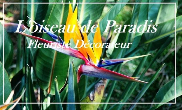 Visuel du projet L'oiseau de Paradis