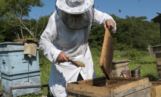 Visuel du projet Sauvons nos abeilles
