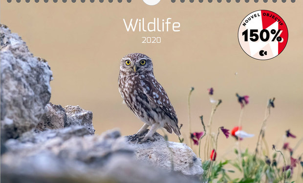 Project visual Calendrier Photo 2020 sur les Animaux Sauvages