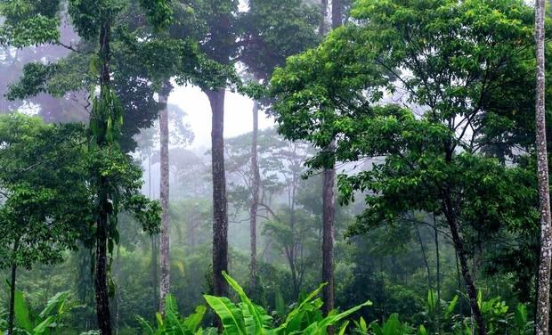 Project visual Creation d'aires protégées pour la préservation de la biodiversité en Equateur
