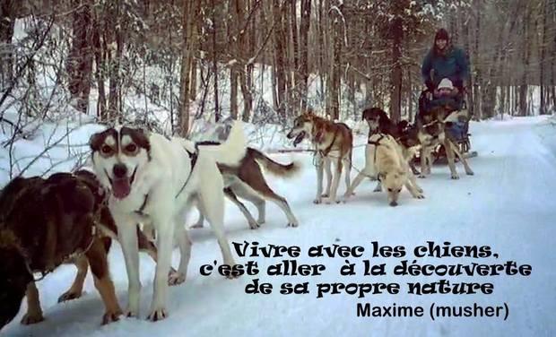 Visueel van project Multi-species relations : sled dogs and mushers