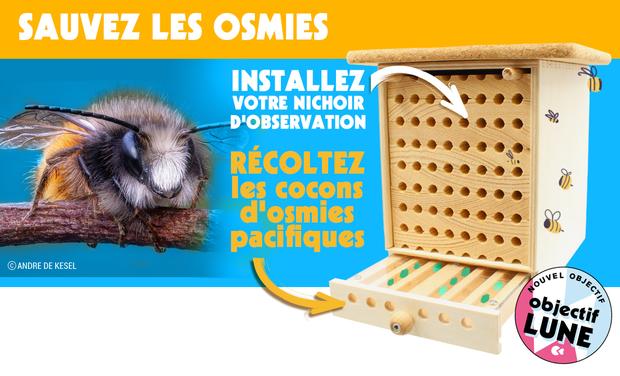 Visuel du projet Les Dorloteurs d'Abeilles : observez et récoltez vos cocons d'osmies pacifiques