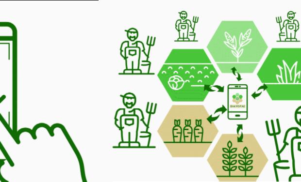 Project visual ShaYoFae : encourager une agriculture vertueuse grâce au partage d'expérience