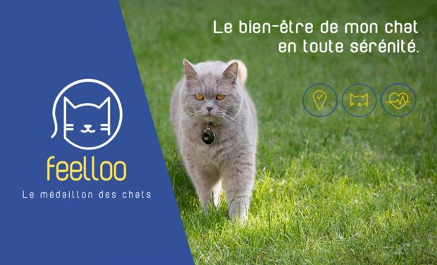 Visuel du projet Feelloo, le médaillon intelligent de votre chat
