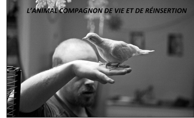 Project visual ANIMAUX, COMPAGNONS D'INSERTION