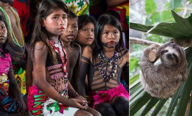 Project visual Replanting the forest of the indigenous Embera people