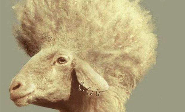 Project visual Méribo : des pulls en laine de Mérinos 100% fabriqués en France