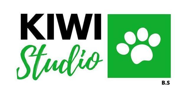 Project visual Développement Kiwi Studio