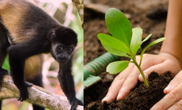 Project visual More Trees for Monkeys