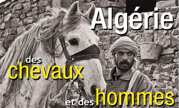Project visual Algérie, des chevaux et des hommes