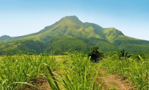 Visuel du projet Reportage : Soutenir l'écologie caribéenne
