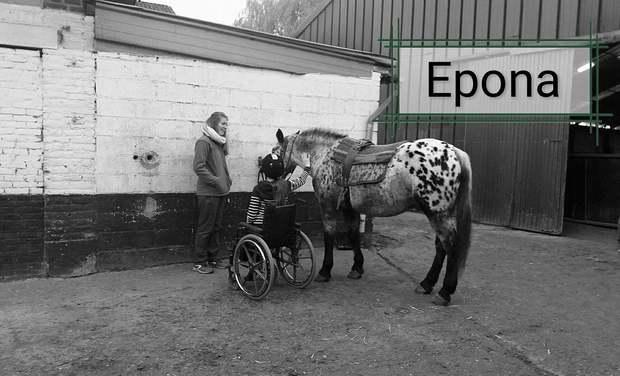 Omslagfoto van project Epona et vous. Soutien pour les chevaux d'hippotherapie