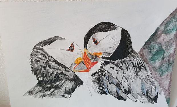 Project visual Dessins reportage afin d'aider à la préservation du vivant en voie d'extinction