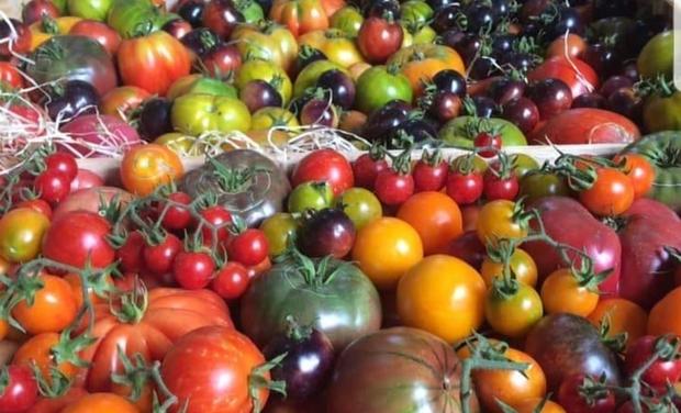 Omslagfoto van project Semez votre graine, plants anciens ou sauvages pour la santé de tous