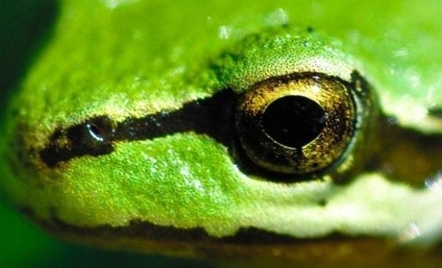 Visueel van project FrogSocks - Des Chaussettes Made in France & Bio comme on en a jamais vu !
