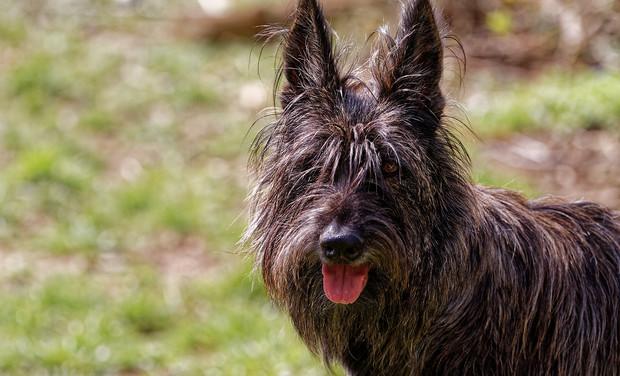 Project image Un nouveau service : éducateur canin à domicile
