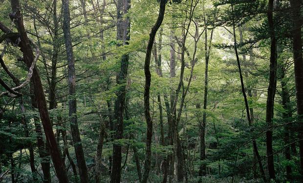 Visuel du projet Out of sight, par Delphine Parodi & Yoko Tawada
