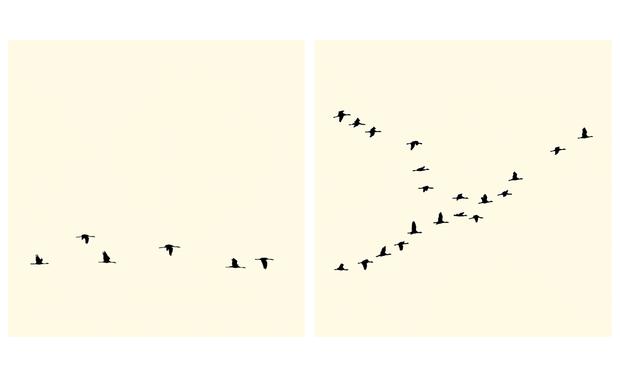 Visuel du projet SENBAZURU ART BOOK