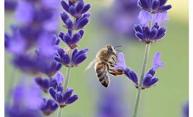 Project visual Une abeille dans la ville
