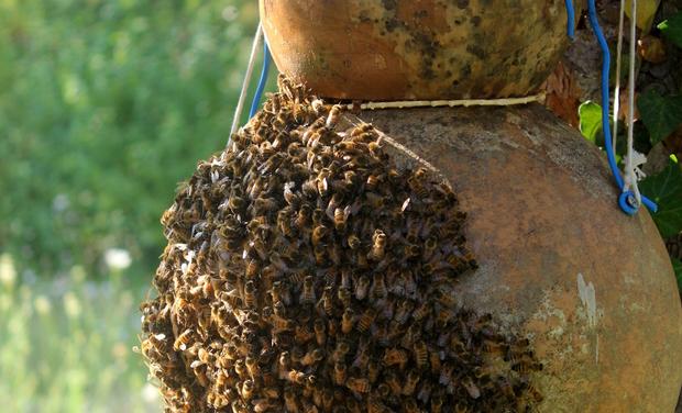 Visueel van project Pour une apiculture alternative