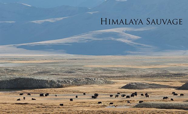 Visuel du projet Himalaya Sauvage
