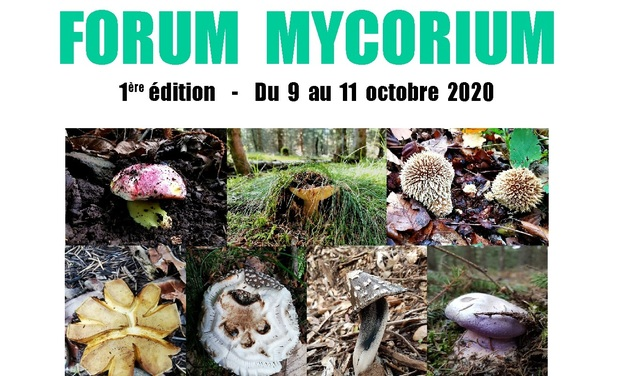 Visueel van project FORUM MYCORIUM - 1ère EDITION