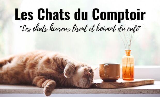 Project visual Bar à Chats - Les Chats Du Comptoir