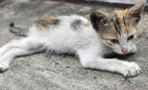 Project visual Soins et stérilisation chats de rue