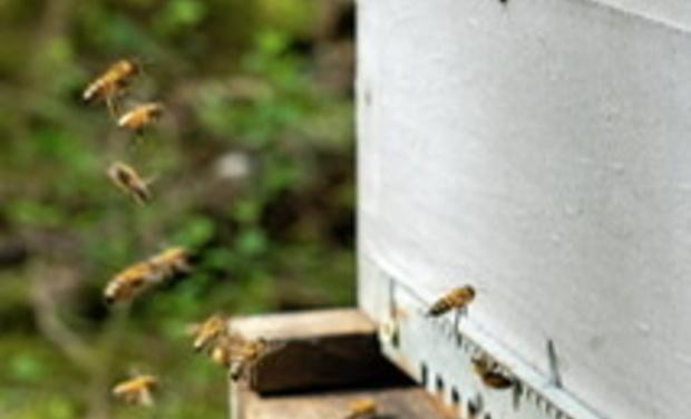 Visuel du projet Soutien au Rucher Bees-anse