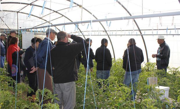 Visueel van project Aidez nous à nous diversifier : Projet Serre de Tomate