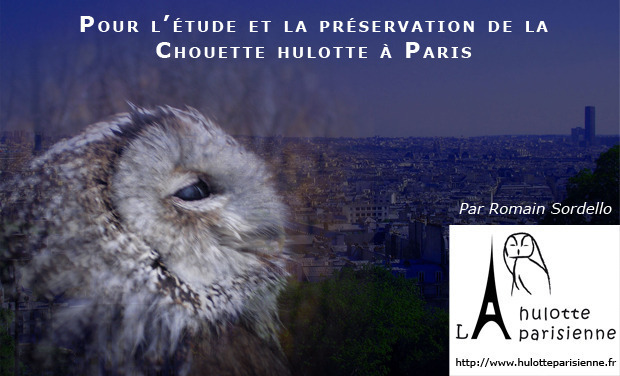 Visuel du projet M'aiderez-vous à préserver la Chouette hulotte à Paris ?