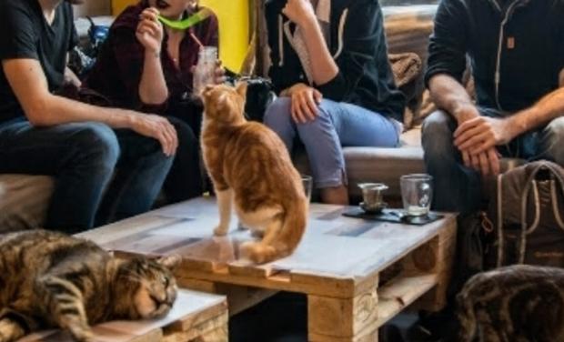 Project visual Criação de um cat coffee em Braga/Création d'un bar à chats au Portugal
