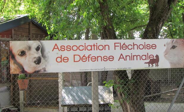 Visuel du projet Une cagnotte pour le Noël des chiens et chats de l'A.F.D.A.