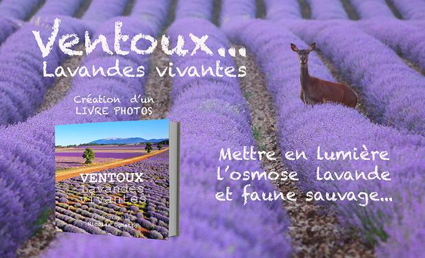 Visueel van project Livre photos Ventoux... Lavandes vivantes