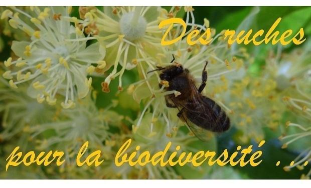 Project visual Des ruches pour la biodiversité