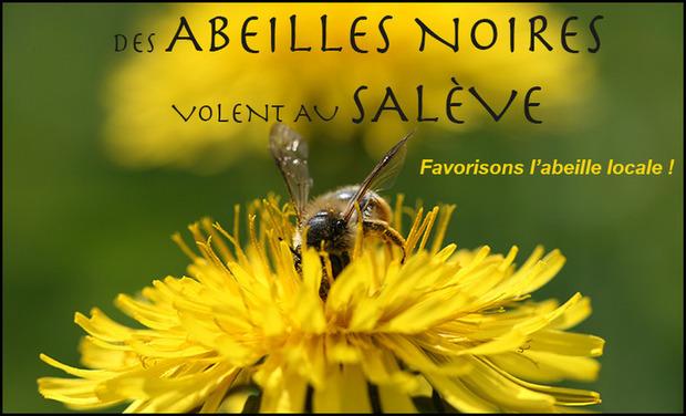 Visuel du projet Des abeilles noires volent au Salève