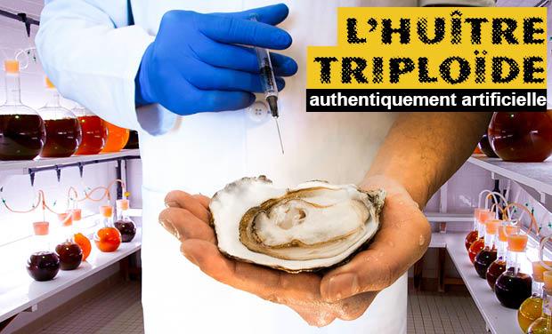 Visuel du projet L'huître triploïde, authentiquement artificielle