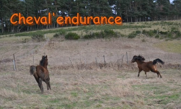 Project visual Cheval'endurance