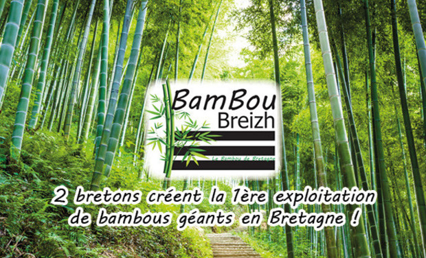 Visueel van project Bambou Breizh : le bambou de Bretagne