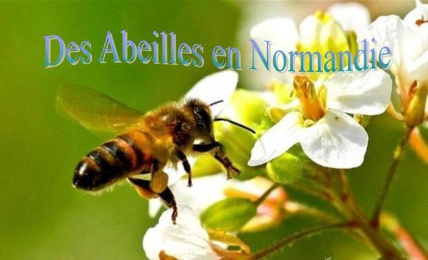 Large_large_abeille