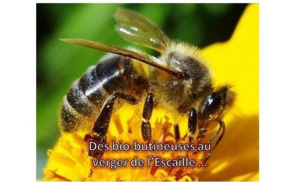 Large_abeille_kkbb