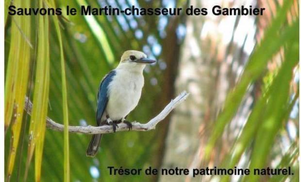 Visuel du projet Sauvons le Martin-chasseur des Gambier (Polynésie), trésor de notre patrimoine naturel!