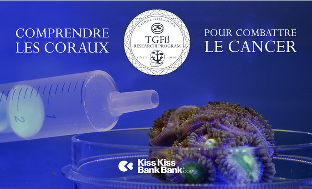 Visuel du projet Comprendre les Coraux pour Combattre le Cancer / Increase our knowledge about corals for fighting cancer