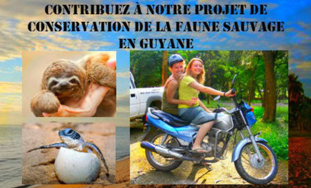 Project visual PROTECTION DE LA FAUNE SAUVAGE EN GUYANE