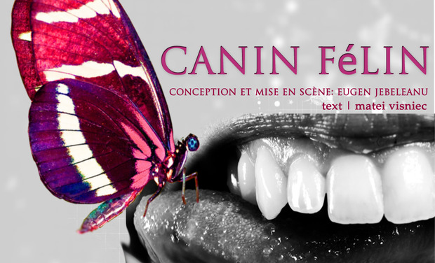 Project visual CANIN FéLIN