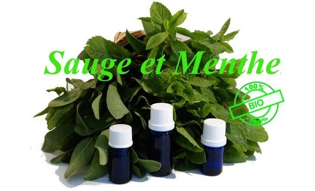 """Visuel du projet Boutique bio """"Sauge et Menthe"""""""